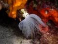 diving11.jpg