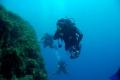 diving12.jpg